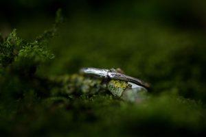 silver-stone-Woodland twig ring